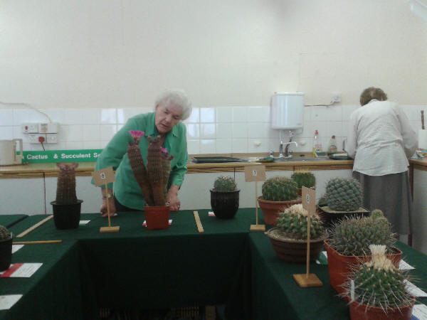 July 2013 - Waltham Forest Cactus Show
